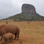 entobeni rhino family