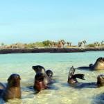 Galapagos LaLoberia