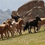 Trans Sib Mongolia horse