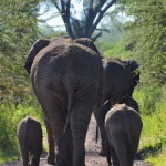 Africa 2018 elephant
